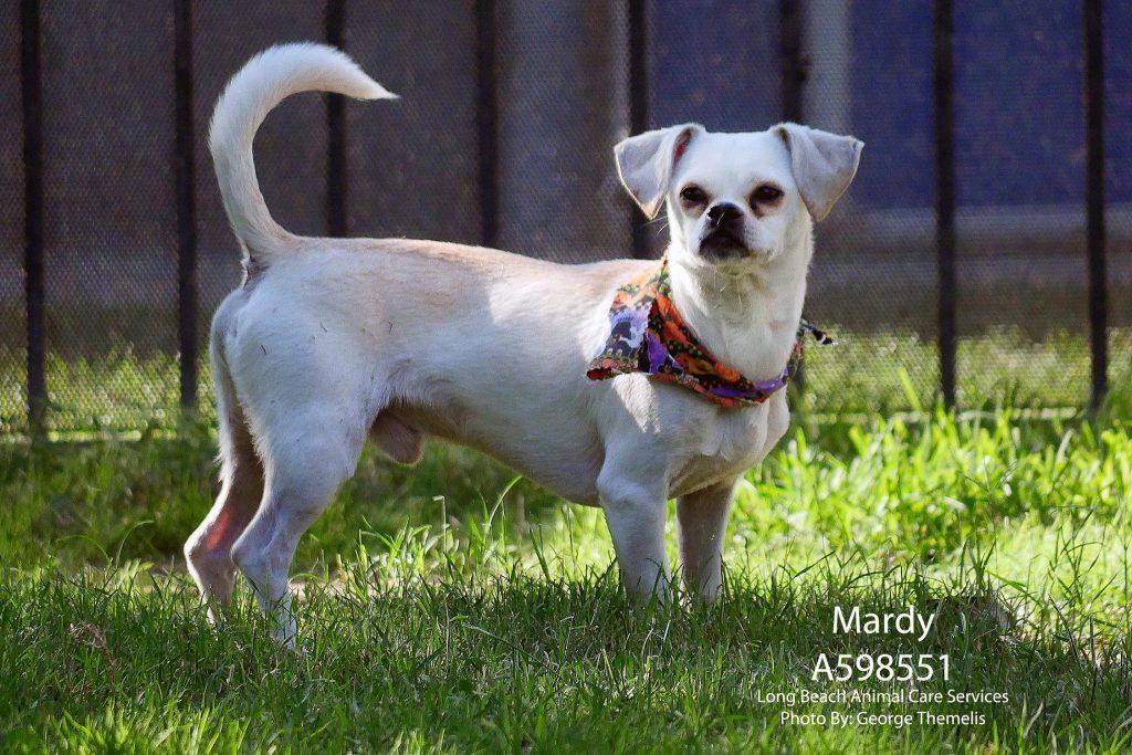 Mardy, November2 Pet of the Week