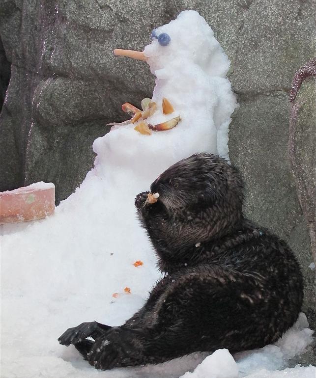 Otter & Snowman
