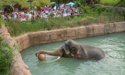 World Elephant Day Returns @ The Los Angeles Zoo August 11-12!