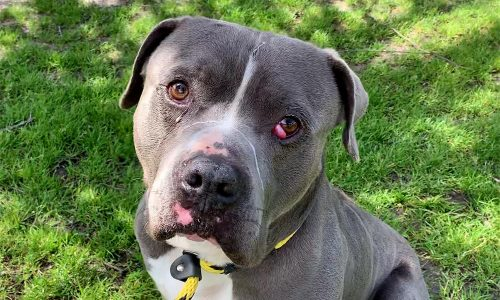 Bubba, March 28th Pet of the Week!