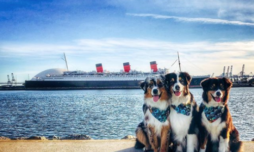 Play, Pamper and Pose at the Queen Mary's Doggie Paradise Saturday, September 14th!