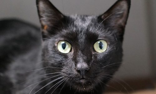Charger, Oct. 3rd Pet of the Week!