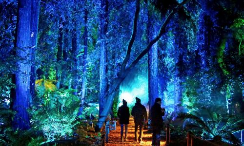 Enchanted Forest of Light Returns Nov. 17, 2019