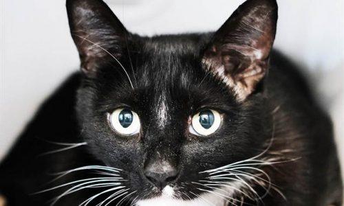Ninja, May 21st Pet of the Week! Update: Adopted!