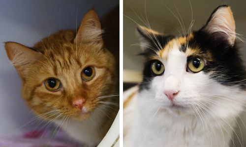 Kali and Ginger, June 25th Pets of the Week!