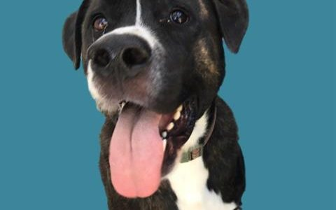 Smitty, June 17th Pet of the Week!