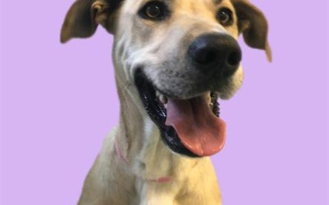 Summer, July 29th Pet of the Week!