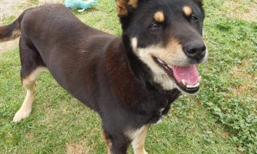 Happy, Sept. 16th Pet of the Week!
